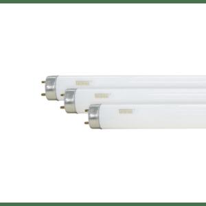 Lâmpada Fluorescente Tubular T8 36W Taschibra